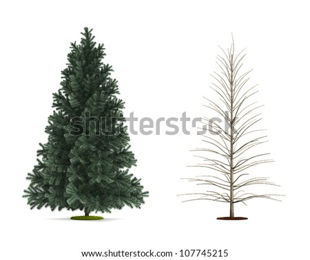 Alpine Fir Tree. High resolution image isolated on white. More trees are available on our portfolio.