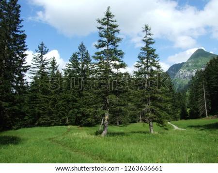 Alpine landscape of Lütisalp (Luetisalp or Lutisalp) area - Canton St. Gallen, Switzerland #1263636661