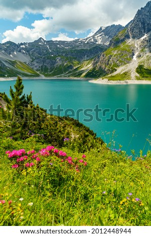 alpine landscape with alpine roses and other alpine flowers, fir tree, reservoir Brand with turquoise water and the mountain range. blue cloudy sky on a summer day in the alps of Vorarlberg, Austria Stockfoto ©