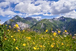 alpine landscape with flowers blooming in idyllic fields and mountain