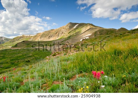 Alpine meadow at Loveland Pass Colorado.