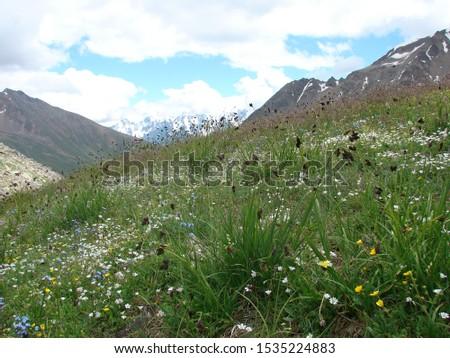 Alpine meadow. Flowering Alpine meadow. #1535224883
