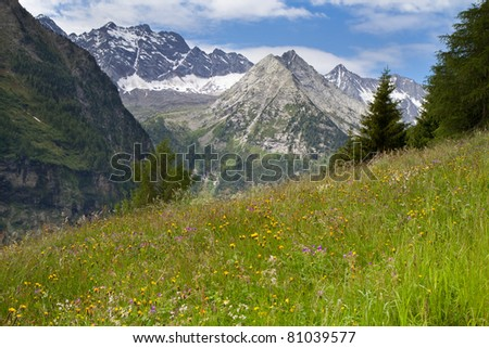 Alpine meadow with beautiful flowers and mountains