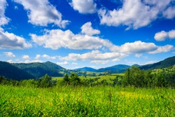 Alpine meadow with tall grass on a background of mountains