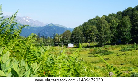 Alpine meadows, high mountains, with peaks and hills. Sublimation wallpaper is perfect for printing in decor. Wildflowers in a meadow surrounded by a fern near a wooden house in the wilderness.  #1486679030