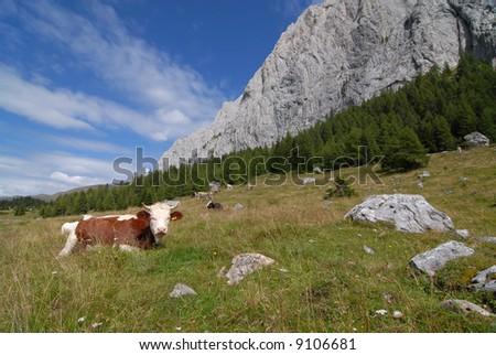 Alpine Pastureland