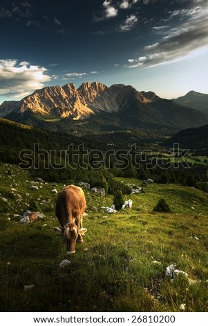 Alpine scenery with grazing cows and dramatic sky.