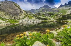 Alpine scenery with wild flowers and glacier lake in summer, in the Alps