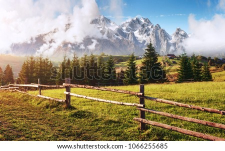 Alps mountain meadow tranquil summer view. Landscape with fog in mountains and rows of trees