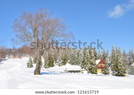 alps snow landscape with house among green pine trees, and no leafs tree on the bright sky