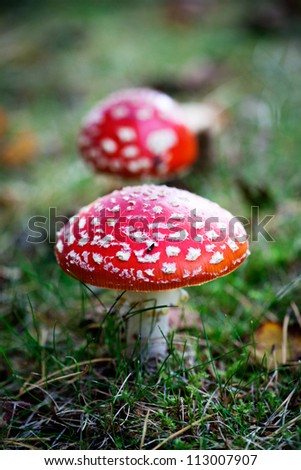 Amanita and colourful autumn leaves in the nature - stock photo