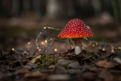 Amanita in a fairy forest. Mushroom in a fairy forest. Autumn in the forest.  Red mushroom. Toxic mushroom.