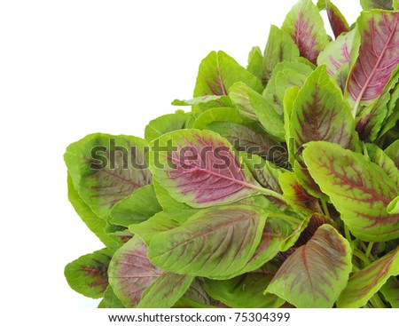 amaranth leaves on the white background