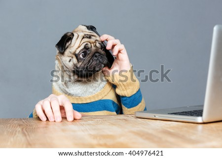 Amazed man with pug dog head talking on mobile phone and using laptop over grey background