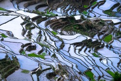 Amazing abstract texture of rice terraces fields with sky colorful reflection in water. Ifugao province. Banaue, Philippines UNESCO heritage