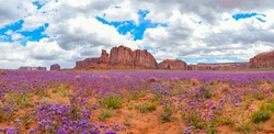 Amazing and Beautiful panoramic landscape in monument valley arizona. See the desert landscape covered in beautiful blue or purple flowers. Travel through the southwest to see breathtaking sights.