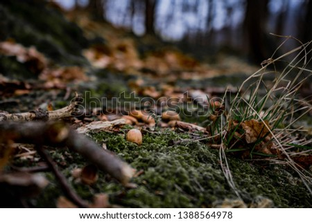 amazing art close up picture of acorns in the green moss in wild nature , blur background