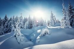 Amazing athmospheric Landscape. winter scenery at sunset. instagram filter. postcard. Snow covered tree under sunlight. Sunlight sparkling in the snow. instagram filter. winter nature background