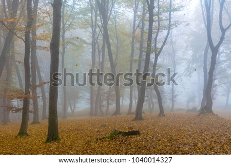 Amazing atmosphere in The Hoia Baciu forest, one of the most haunted forest in the world. It's very knowed for the unexplained phenomena.It was a beautiful foggy and colorful morning.