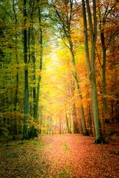 Amazing autumn in the forest in Poland