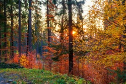 Amazing autumn morning on the mountain trail. Forest with sun rays shining through the trees