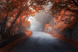 Amazing autumn red forest with road in fog. Fall trees with red foliage. Colorful landscape with woods, road, orange and red leaves, and fog. Travel. Nature background. Magic forest. Fairytale