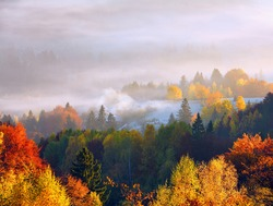 Amazing autumn rural landscape. Fantastic scenery with morning fog. The lawn is enlightened by the sun rays. Green meadows in frost. Touristic place Carpathians valley, Ukraine, Europe.