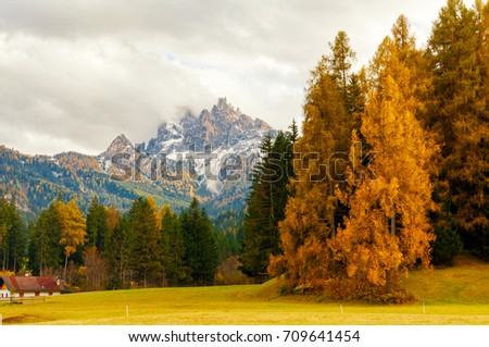 Amazing autumn scenery with yellow larches on foreground and rocky peaks (Picco di Vallandro) on background, Fanes-Sennes-Prags (Fanes-Sennes-Braies) Nature Park, Dolomite Alps, South Tyrol, Italy.