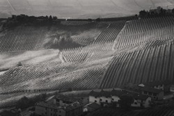 Amazing autumnal landscape in the Langhe, famous vineyard area in Piedmont, Italy, black and white