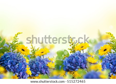 Stock Photo Amazing background with hydrangeas and daisies. Yellow and blue flowers on a white blank. Floral card nature. bokeh butterflies.