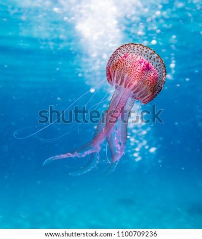 Amazing beautifull colorful jellyfish in the nature