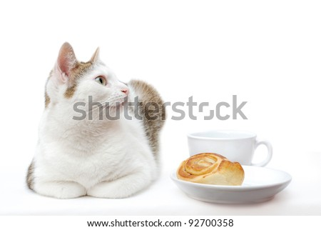 Amazing cat lying near to white saucer and cup