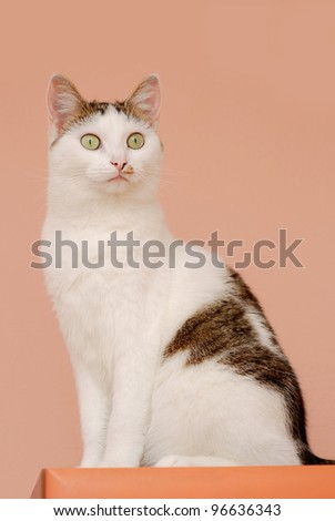 Amazing cat posing on the pink background
