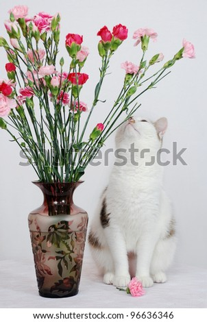 Amazing cat sitting on the table near to vase with flowers