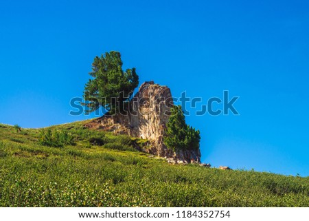 Amazing cedar grows on beautiful rocky stone on green hill in sunny day. Rich vegetation of highlands under blue sky. Branches of coniferous tree shine with sun. Unimaginable mountain landscape. #1184352754