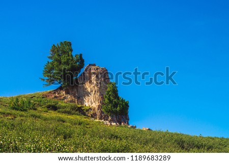 Amazing cedar grows on beautiful rocky stone on green hill in sunny day. Rich vegetation of highlands under blue sky. Branches of coniferous tree shine with sun. Unimaginable mountain landscape. #1189683289