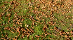 Amazing colorful autumn in Tallinn. Colourful maple leaves in the park. Nice sunny autumn day. Shiney golden leaves