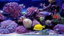 Amazing colorful saltwater coral reef aquarium
