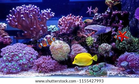 Amazing colorful saltwater coral reef aquarium #1155427993