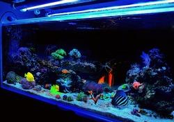 Amazing colorful saltwater Coral Reef Aquarium Tank