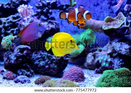 Amazing coral reef aquarium moment