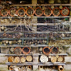 Amazing deluxe home for bugs and insects