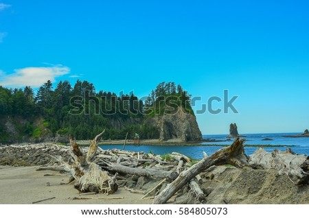 Amazing Driftwood on La Push Beach, adjacent to Olympic National Park, Washington Coast, USA #584805073