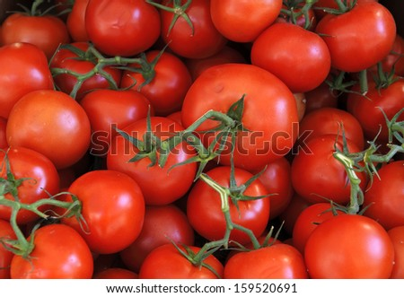 Amazing Fresh Ripe Red Tomatoes on Vine at a farmers market in France