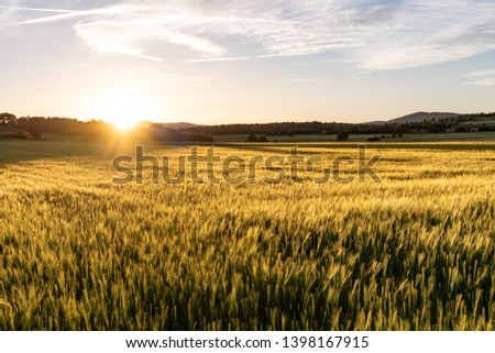 Amazing grass field landscape with spikes at sunset. The light of sunset over the field. Beautiful sky. Nature concept.  #1398167915