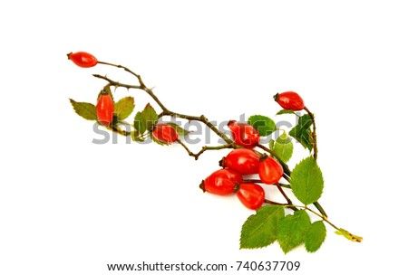 Amazing Health Benefits Of Rose Hips. Rose hips with leaf on white background. #740637709