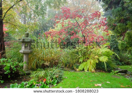 Amazing japanese maple with red leaves ( also in spring and summer) . Awe foggy day at autumn in Japanese garden in Leverkusen Stock photo ©