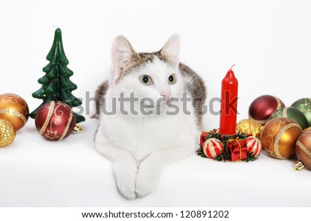 Amazing lady-cat laying on the white background among the Christmas toys and candles