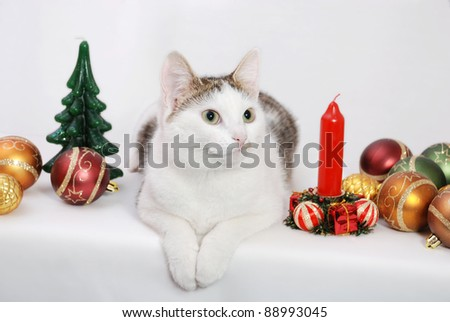 Amazing lady-cat laying on the white background and Christmas toys and candles around