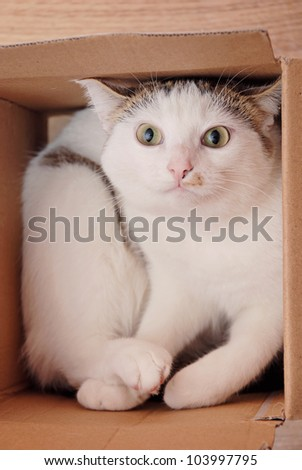 Amazing lady-cat lying in the carton box
